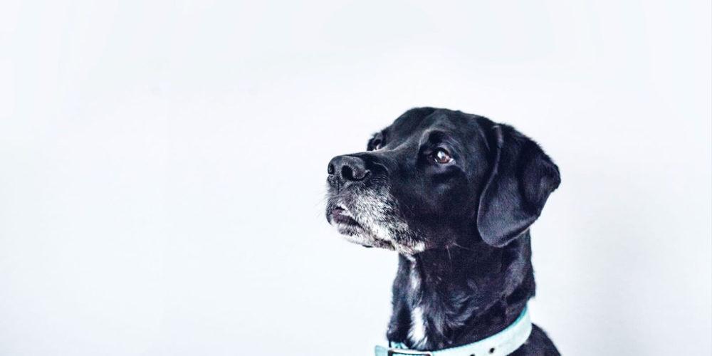 Beste hondenboeken Puurhonden Sandra Dekker