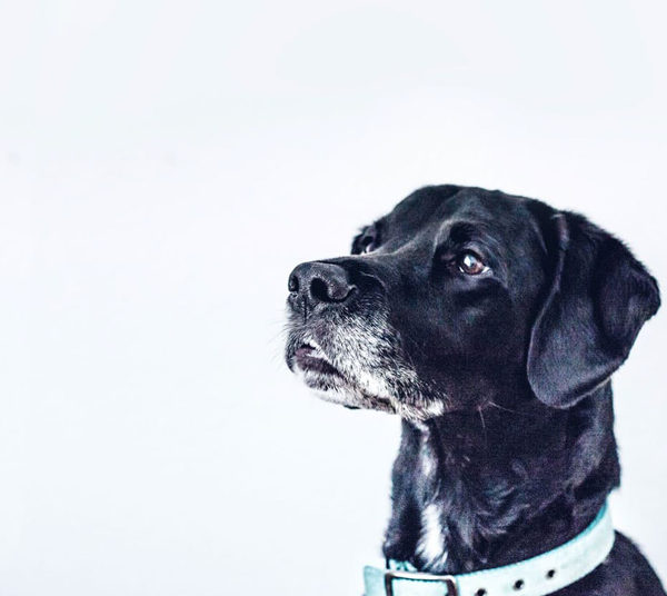 9 Beste hondenboeken