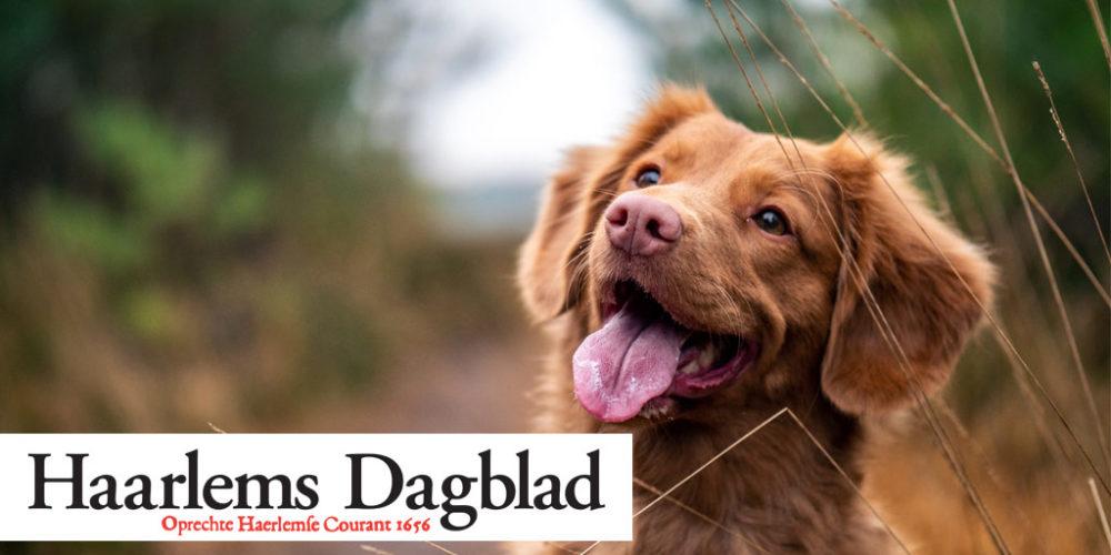Bloemendaal honden bij Puurhonden.nl