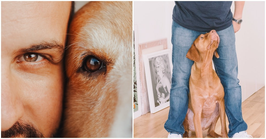 Hulphond depressie informatie bij Puur Honden