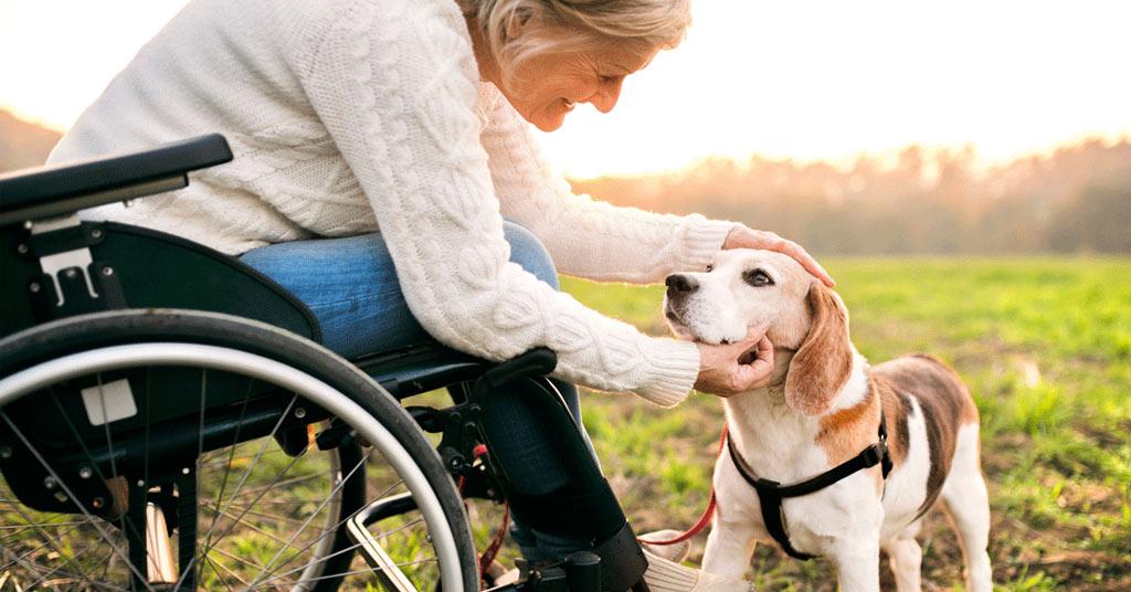 adl hond informatie bij Puur Honden