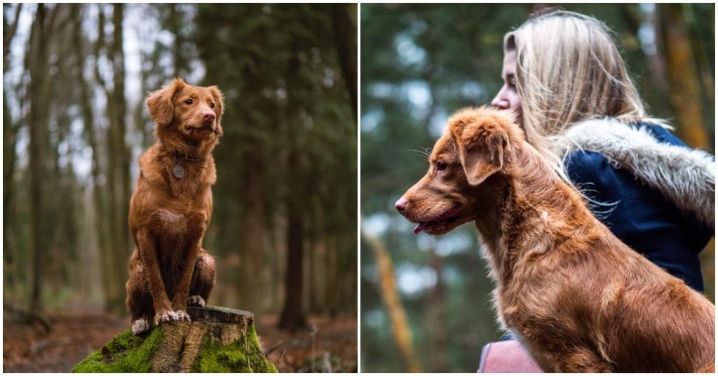 honden coach inhuren bij Puur Honden