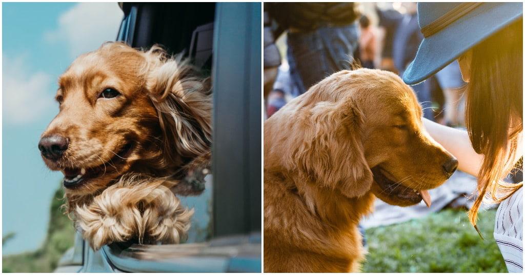 hulphond autisme informatie bij Puur Honden