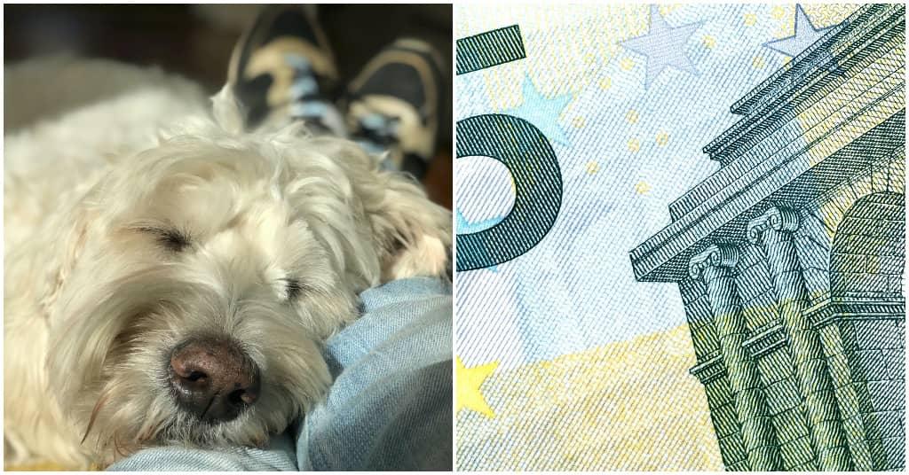 hulphond vergoeding informatie bij Puur Honden