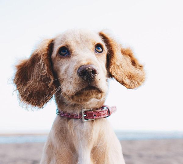 Een hond als hulp
