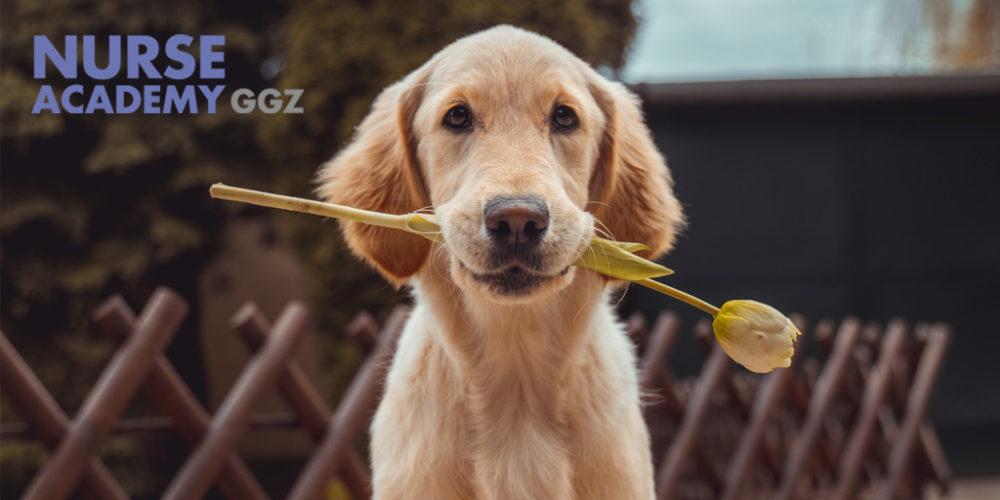 Hondencoach Sandra Dekker geeft antwoorden en inzichten in de rol van een psychiatrische hulphond