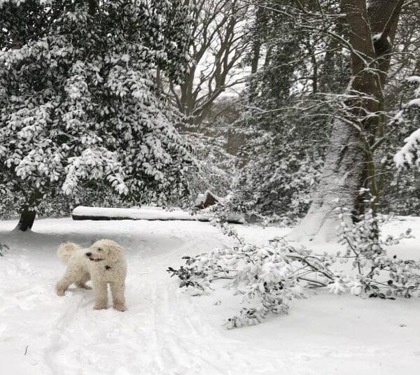Sneeuwpret voor hond